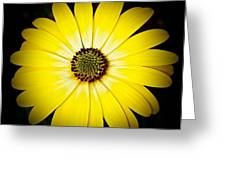 Diasy Burst Greeting Card