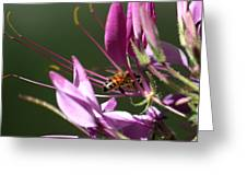 Digging In The Stamens Greeting Card