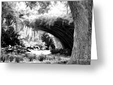 Digital Paint Black White Landscape Louisiana  Greeting Card