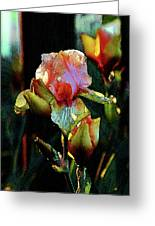 Digital Painting Vibrant Iris 6764 Dp_2 Greeting Card
