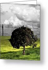Digital Photography - The Prisoner Greeting Card