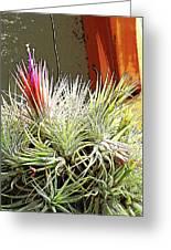 Digital Plant Greeting Card