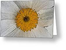 Digital Poppy Greeting Card