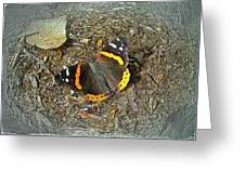 Digital Red Admiral Butterfly - Vanessa Atalanta Greeting Card