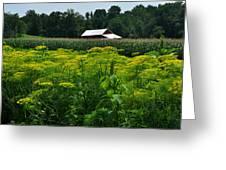 Dill Field Hudson Valley Ny Greeting Card