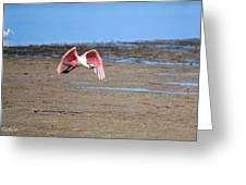 Ding Darling - Roseate Spoonbill - Taking Flight Greeting Card
