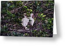Ding Darling Wildlife Refuge I Greeting Card