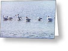 Ding Darling Wildlife Refuge IIi Greeting Card