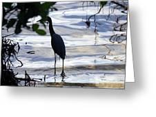 Ding Darling Wildlife Refuge Iv Greeting Card