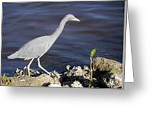 Ding Darling Wildlife Refuge Vii Greeting Card