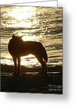 Dingo Sunset Greeting Card