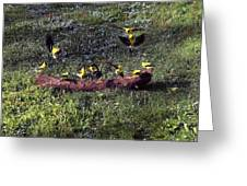 Goldfinch Convention Greeting Card