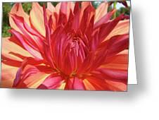 Dinner Plate Dahlia Flower Art Print Orange Baslee Troutman Greeting Card