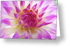 Dinner Plate Dahlia Flower Art Prints Canvas Floral Baslee Troutman Greeting Card