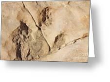 Dino Tracks In The Desert 3 Greeting Card