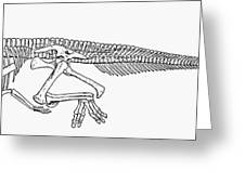 Dinosaur: Corythosaurus Greeting Card