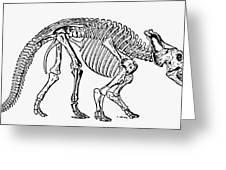 Dinosaur: Monoclonius Greeting Card
