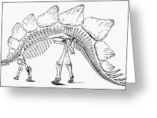 Dinosaur: Stegosaurus Greeting Card
