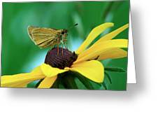 Dion On A Brown Eyed Susan Greeting Card