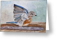 Dip Time - Eastern Bluebird Greeting Card by Angeles M Pomata