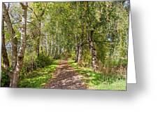 Dirt Path In A Birch Grove  Greeting Card