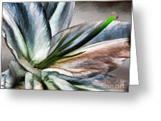 Dirty White Lily 1 Greeting Card