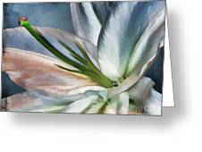 Dirty White Lily 2 Greeting Card