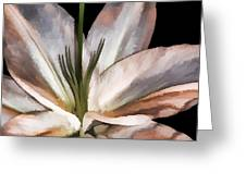 Dirty White Lily 3 Greeting Card