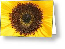 Disc Florets Greeting Card