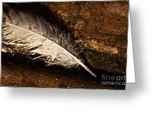 Discarded Feather Greeting Card