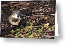 Disfigured Bird Greeting Card