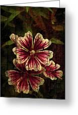 Distinctive Blossoms Greeting Card