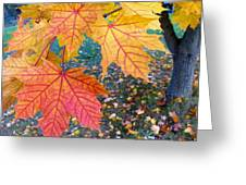 Distinctive Maple Leaves Greeting Card