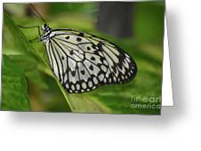 Distinctive Side Profile Of A White Tree Nymph Butterfly Greeting Card