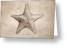 Distressed Antique Nautical Starfish Greeting Card
