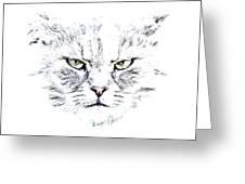 Disturbed Cat Greeting Card