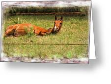 Disturbed Napping Greeting Card
