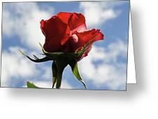 Diva Rose Greeting Card