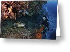 Diver And Sea Turtle, Manado, North Greeting Card