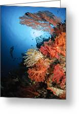 Diver Swims By A Soft Coral Reef Greeting Card