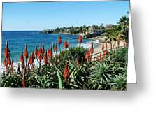 Divers Cove Laguna Greeting Card