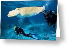Divers Swim Near A Cuttlefish Greeting Card