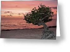 Divi Divi Aruba Greeting Card