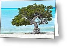 Divi-divi Aruba Greeting Card