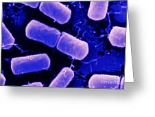 Dividing Bacteria Greeting Card
