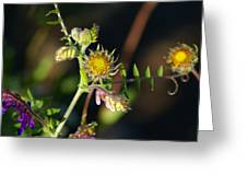 Divine Natural Creations Greeting Card
