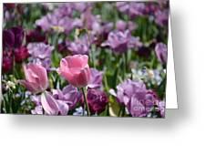 Divine Tulip Display Greeting Card