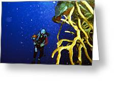 Diving The Wall At Little Cayman Greeting Card