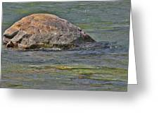 Diving Turtle Rock - Flathead River Middle Fork Mt Greeting Card by Christine Till