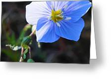 Dixie Blue Greeting Card